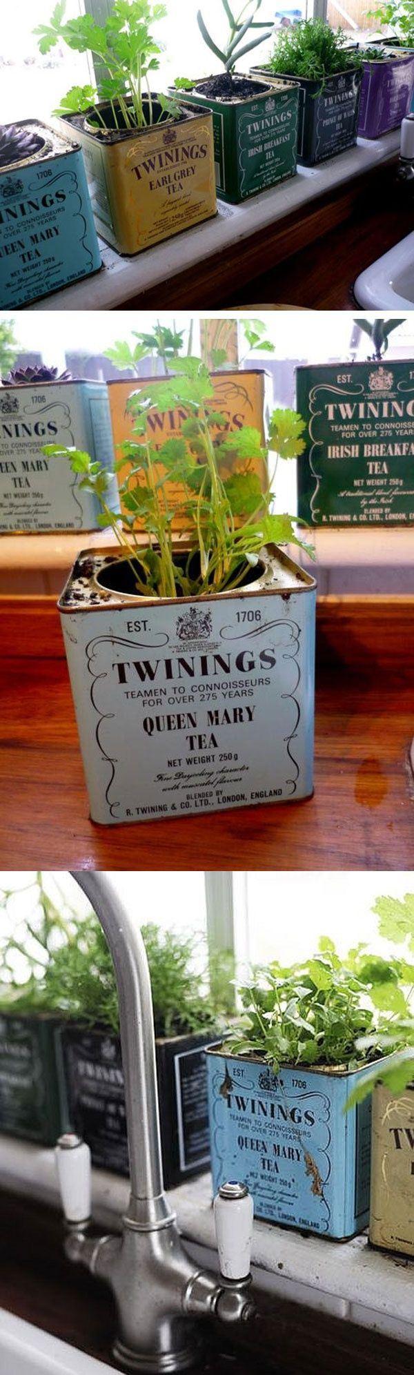 Çay tenekesi kutusu saksı