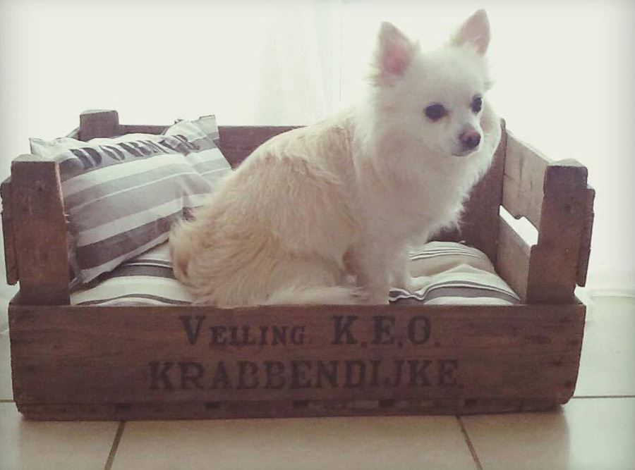 Fruit Crate Dog Bed