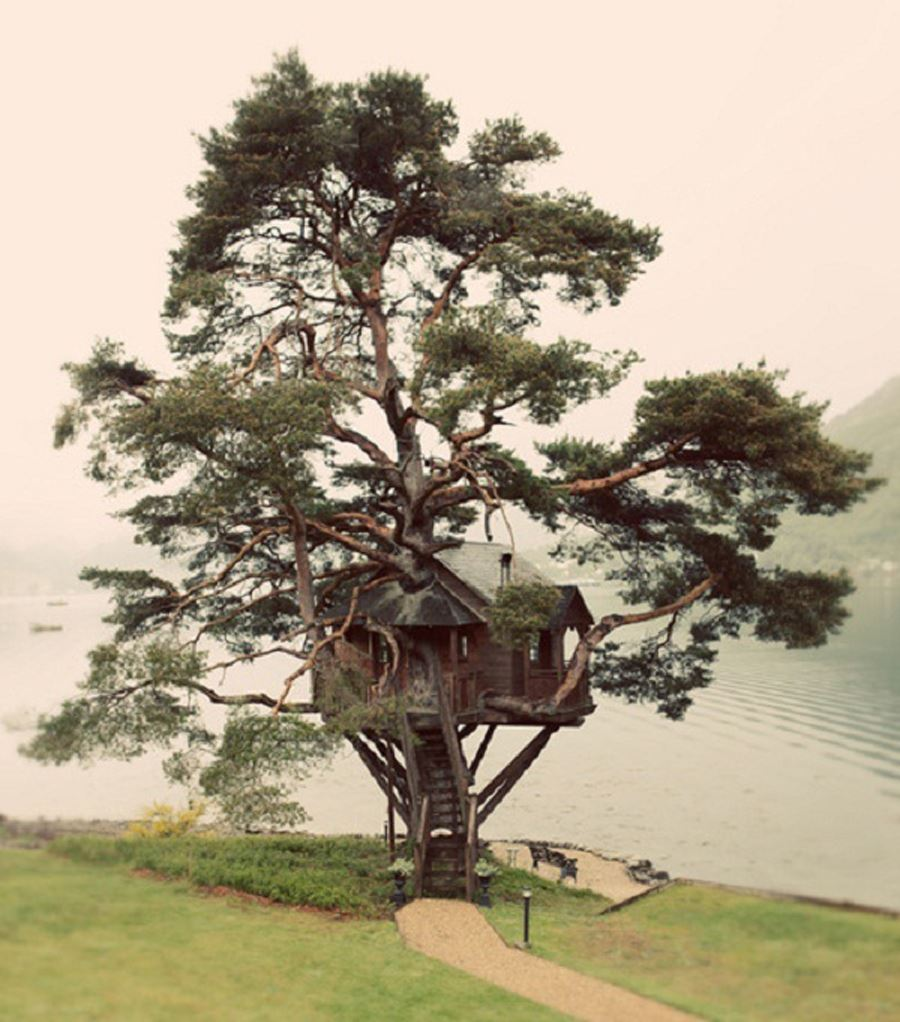 Durable and robust tree selection for tree house