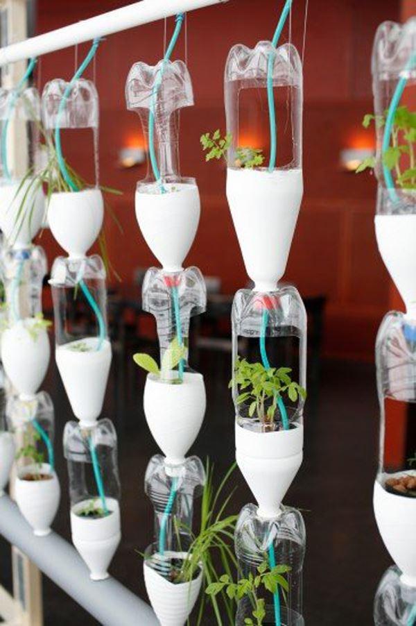 Plastik şişeler ile saksı bahçesi